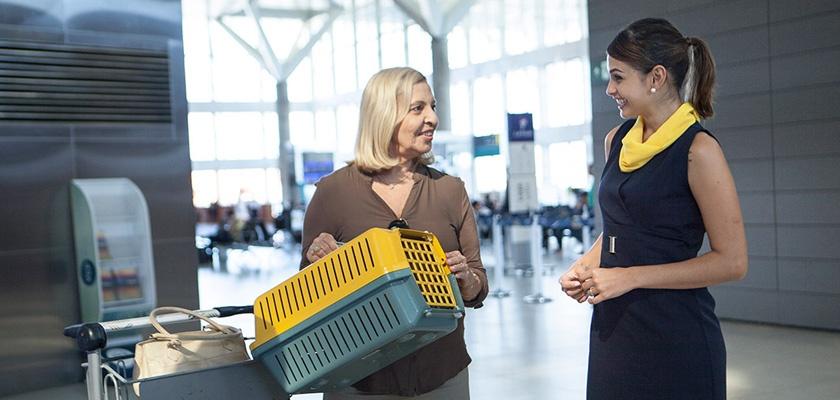 Quais as regras para transportar animais em avião?